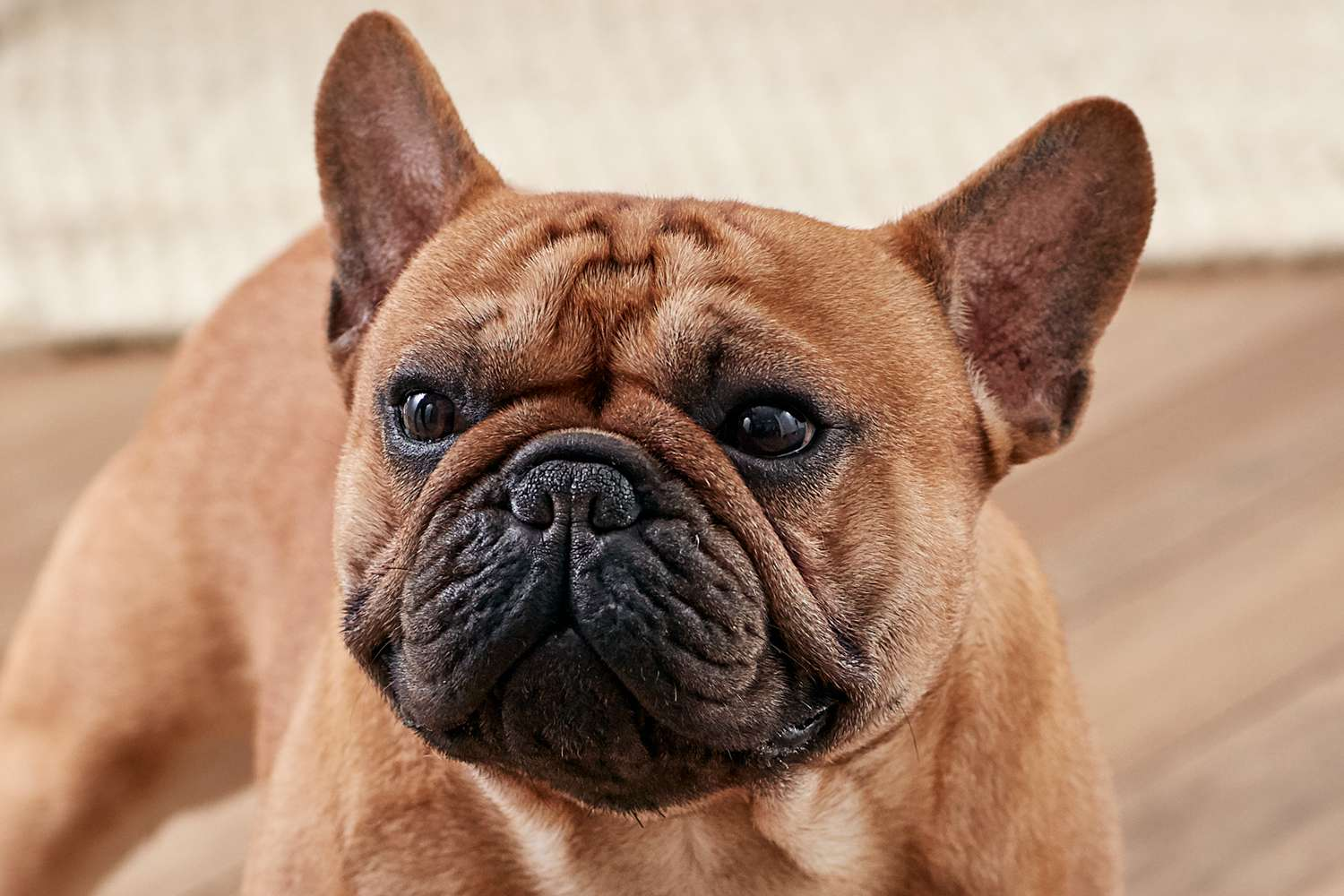 Creating Food For Your French Bulldog